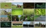 Dzika przyroda Francji / Wild France (2011) PL.TVRip.x264 / Lektor PL