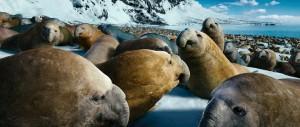 Happy Feet: Tupot ma³ych stóp 2 / Happy Feet Two (2011) PLDUB.480p.BRRip.XviD.AC3-ELiTE + Rmvb / Dubbing PL