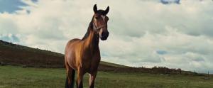 Czas Wojny / War Horse (2011) BRRip.XviD.Ac3.Feel-Free Napisy PL +rmvb +x64